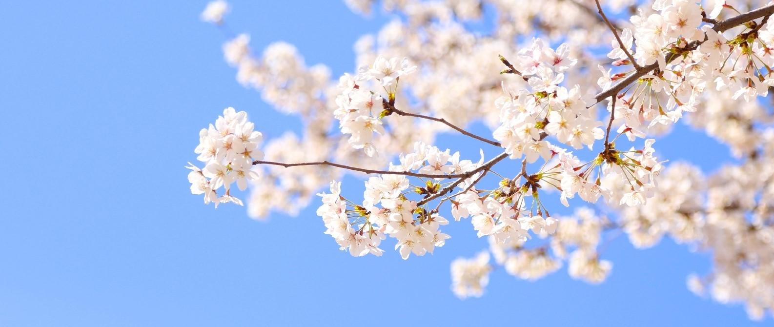 春期講習のご案内(高校生)